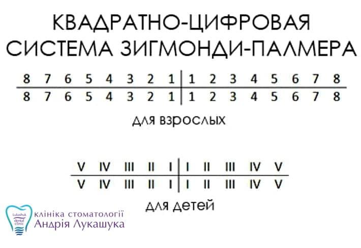 Квадратно-цифровая система нумерации зубов | Фото - Клиника Лукашука
