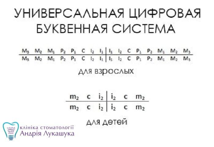 Система цифр и буквнумерации зубов | Фото - Клиника Лукашука