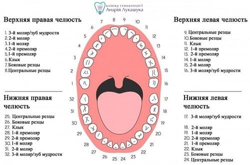 Универсальная системанумерации зубов | Фото - Клиника Лукашука
