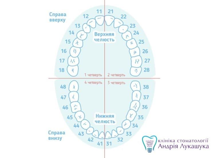 Нумерация зубов | Фото - Клиника Лукашука